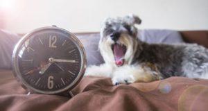 Cum resimt cainii trecerea timpului