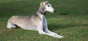 ogar greyhound