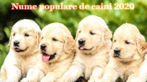 nume populare de caini 2020